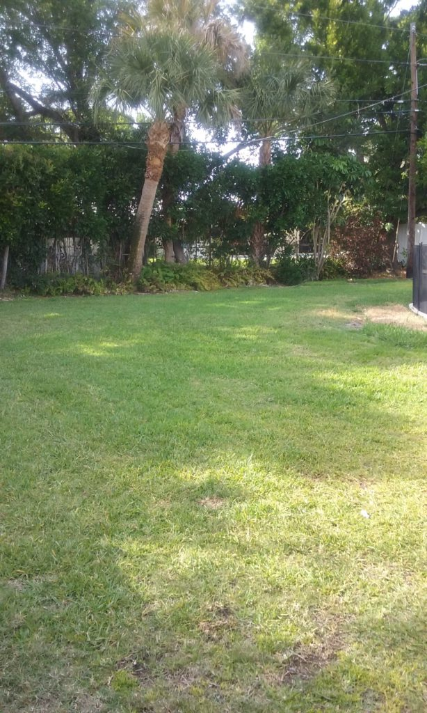 Picture of backyard to the left of the swimming pool